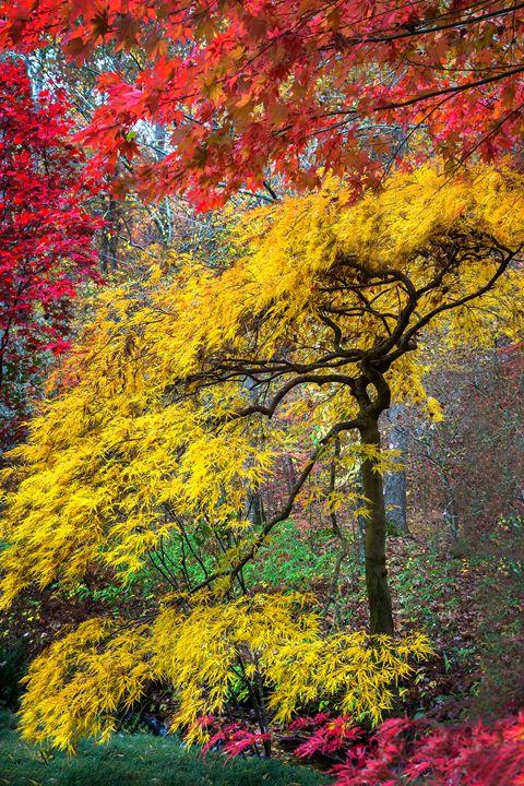 Autumn Zen - Dennis Sabo Photography