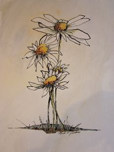 Flowers Pen & Ink 671 - Mark Jenkins Watercolors