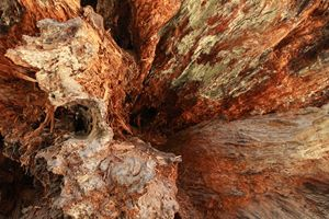 Tree Textures 2