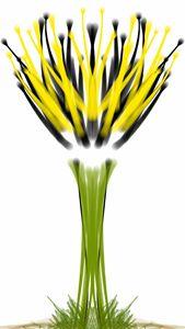 Future Flower - Imo Solo