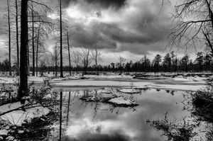 Winter in Wharton State Forest