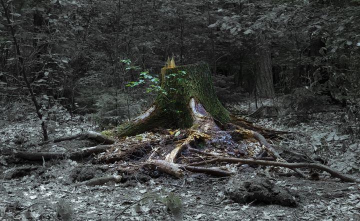 The grand stump - Roman Kolpakov's Photography