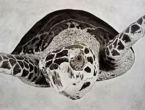 Turtle Wisdom - Savanti Art Gallery