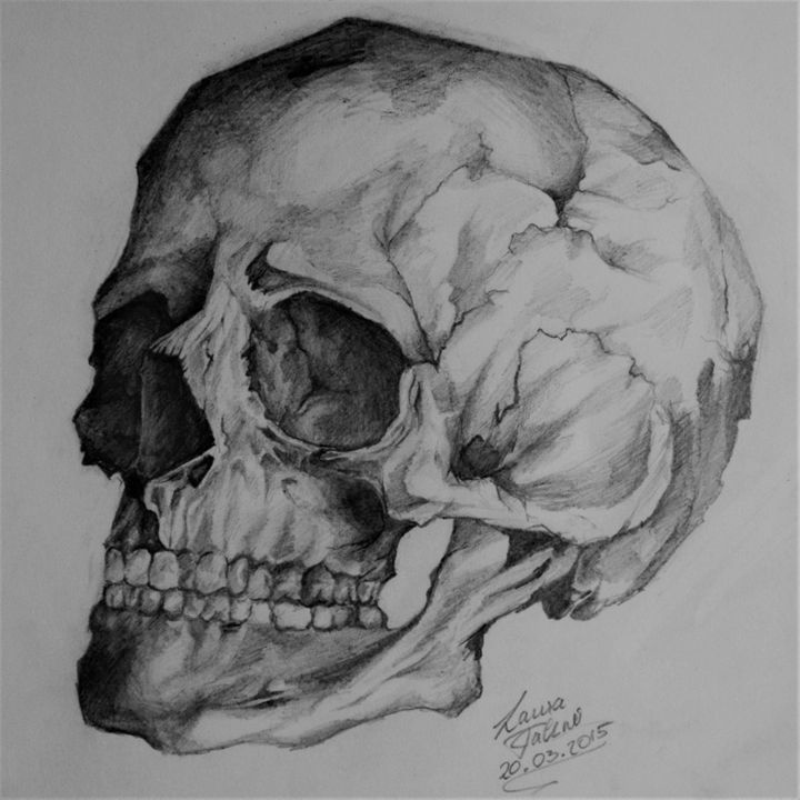 Skull - Lavendale