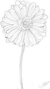 Daisy on a stem [Large]