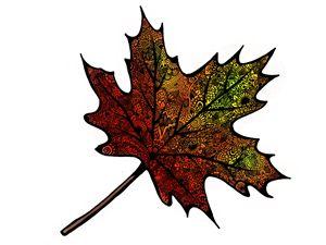 Mandala leaf