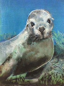 Sea Lion Jurien Bay