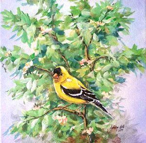 Goldfinch Male
