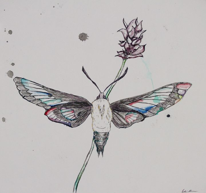 Moth and Lavender - Penrose Art