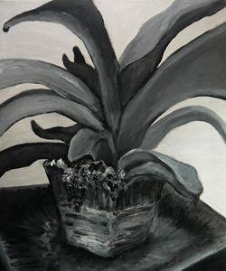 Plant Study, Black and White