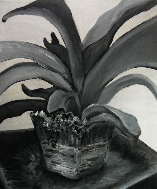 Plant Study, Black and White - Art By Josephine