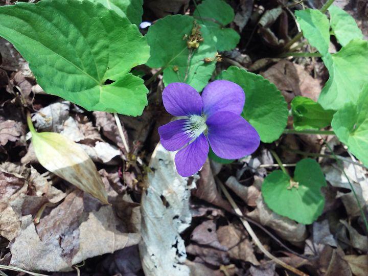 Purple flower - veeralinndot