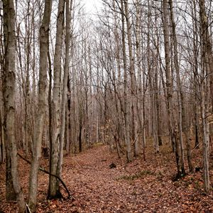 Poplar Woods