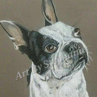 Boston terrier - Art by stephanie
