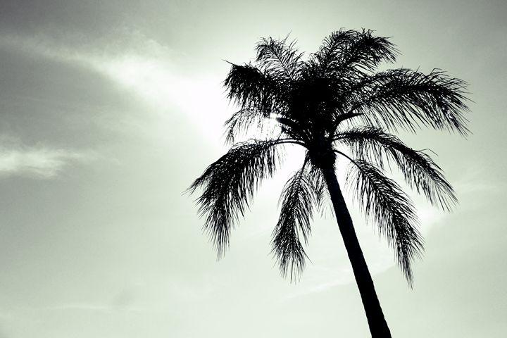 Tropical mood - Kat&Kout