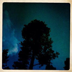 Pine at Dusk