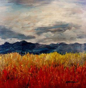 Colorado Fields