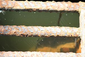 Web of rust