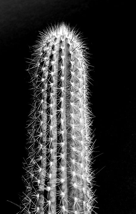 A Prickly Situation - DANIEL RAVEL PHOTOGRAPHY