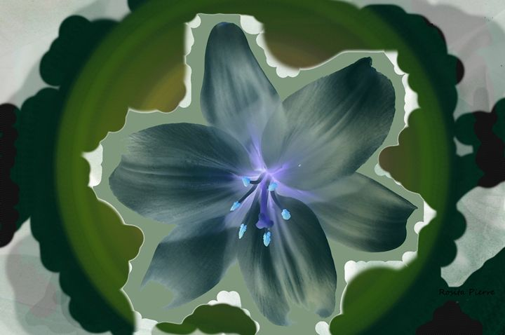 The Amaryllis Glow - RositaArt