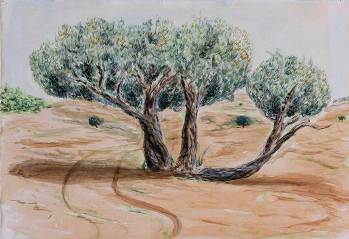 Olive trees - Amit Bar