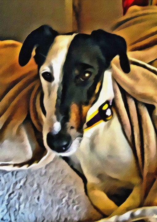 Dog Under Blanket - Prints by Michel