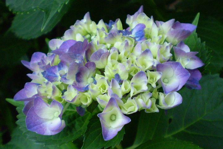 Flower4 - Pepsiart