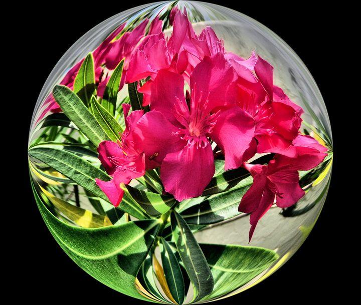 Flower12 - Pepsiart