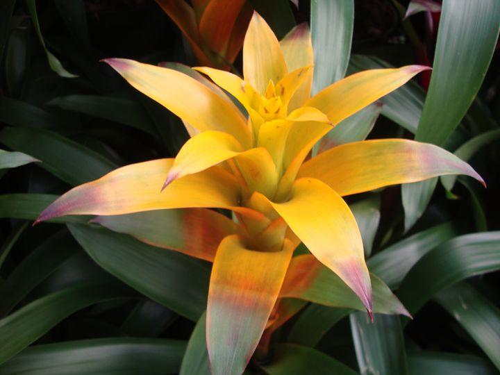 Flower28 - Pepsiart