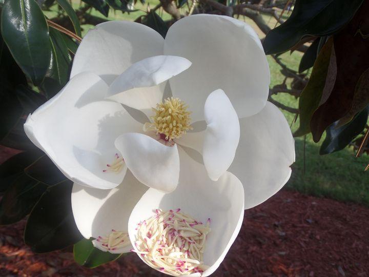 Flower 53 - Pepsiart