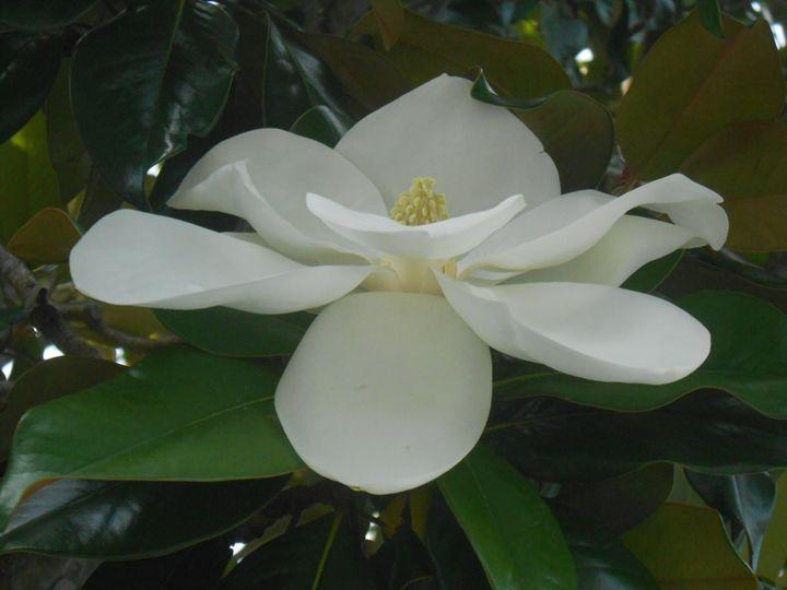 Flower63 - Pepsiart