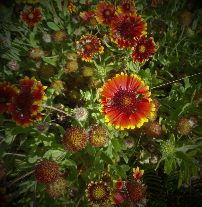 flowers 79 - Pepsiart