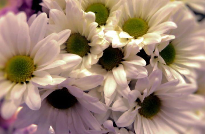 FLOWERS 81 - Pepsiart