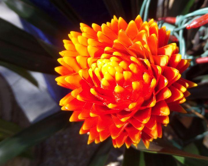 FLOWERS 90 - Pepsiart