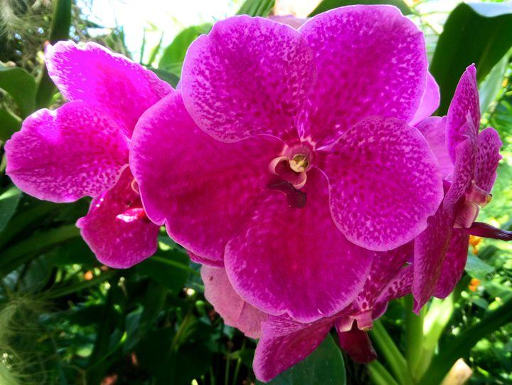 FLOWERS 99 - Pepsiart