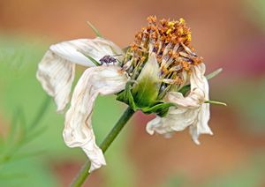Destructured flower and little fly.