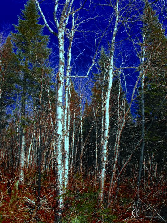 Forest in Quebec - CK Photography