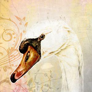 White Swan, Vintage