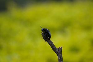 bug on stick