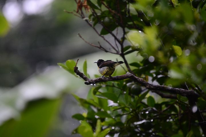 bird in rain - A.R ART PHOTOGRAPHY