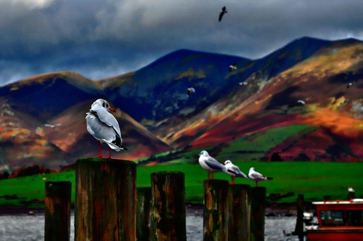 Gulls in a Row - D. van Doorn