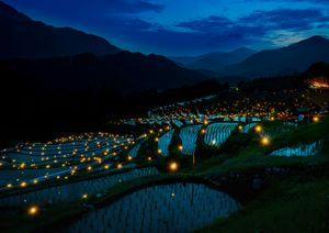 Evening Rice Fields