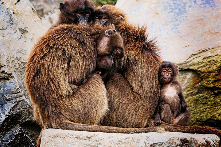 Primates - D. van Doorn