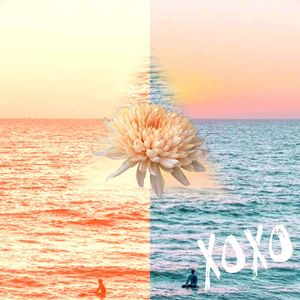 XOXO of sea