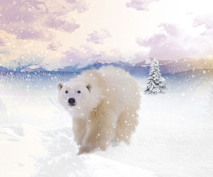 polar  bear snow - Lee went