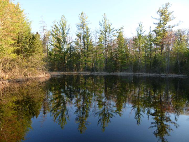 Reflective Pond in Michigan - Seize the Moment