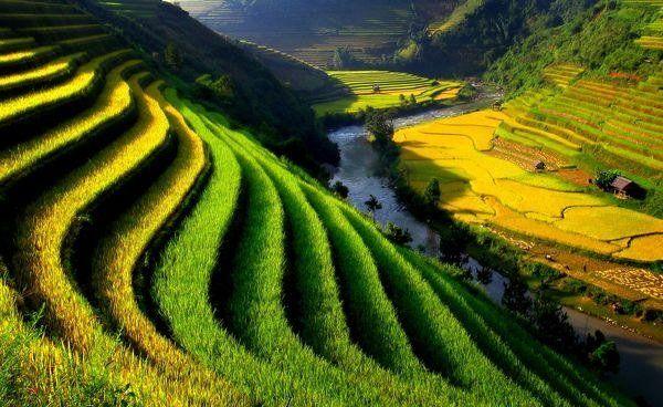 Quê Hương Việt Nam - P. Linh