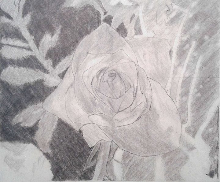 Lone rose - Shy Drawing