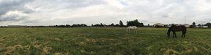 Field Eleven's Horses