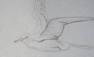 Free Bird - RedBirds Art